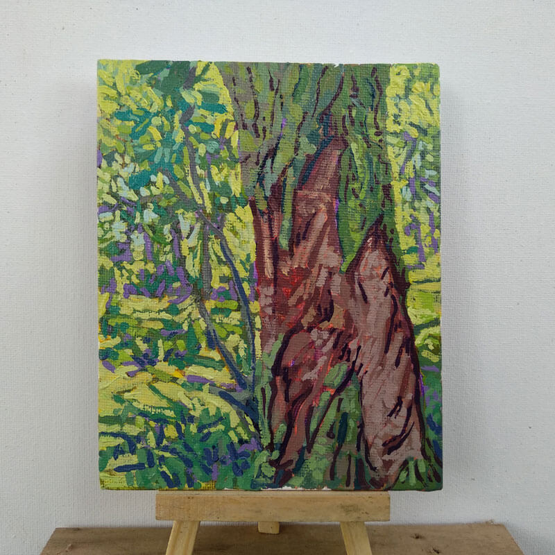 Árbol de eucalipto entre el bosque. Image